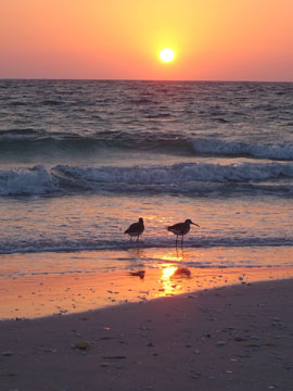 Sunset at Cayo Costa State Park image